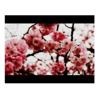 Blossom Post Card