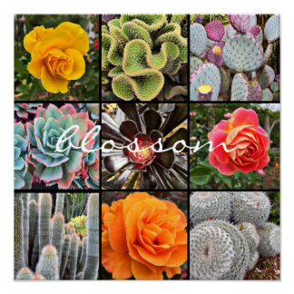 """""""Blossom"""" Quote Chic Cacti & Roses Close-up Photo Poster"""