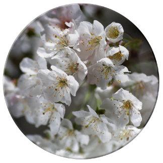 Blossom Spring In White Porcelain Plate