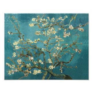 Blossoming Almond Tree - Van Gogh Photo Print