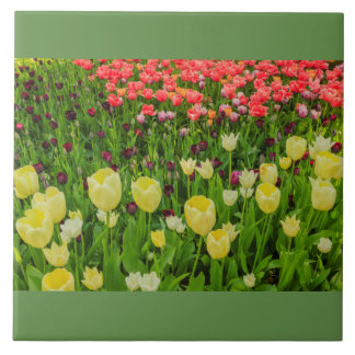 blossoming of tulips in a park on ceramic tile