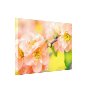 Blossoming Orange Quince Tree Canvas Print