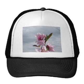 Blossoming peach tree against the cloudy sky cap