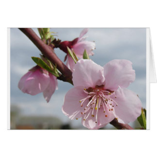 Blossoming peach tree against the cloudy sky card