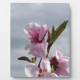 Blossoming peach tree against the cloudy sky photo plaque