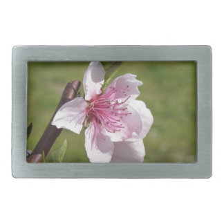Blossoming peach tree against the green garden belt buckles