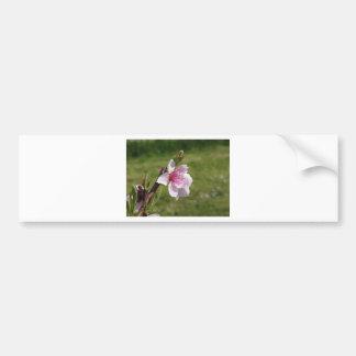 Blossoming peach tree against the green garden bumper sticker