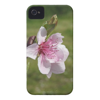 Blossoming peach tree against the green garden iPhone 4 cases