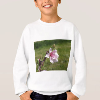 Blossoming peach tree against the green garden sweatshirt