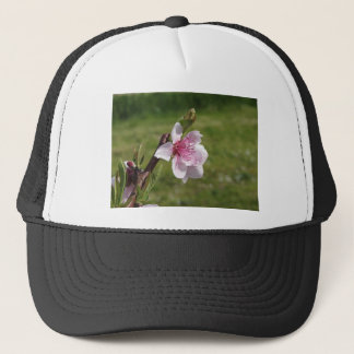 Blossoming peach tree against the green garden trucker hat