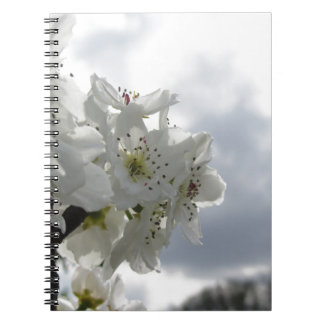 Blossoming pear tree against the cloudy sky notebook