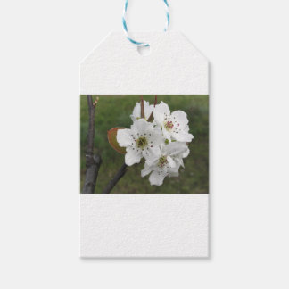 Blossoming pear tree against the green garden