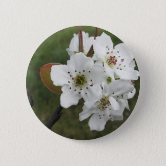 Blossoming pear tree against the green garden 6 cm round badge