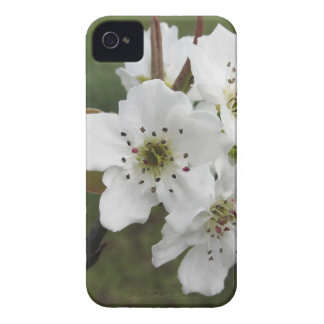 Blossoming pear tree against the green garden Case-Mate iPhone 4 case