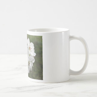 Blossoming pear tree against the green garden coffee mug
