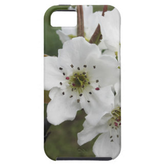 Blossoming pear tree against the green garden iPhone 5 case