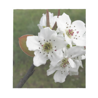 Blossoming pear tree against the green garden notepad