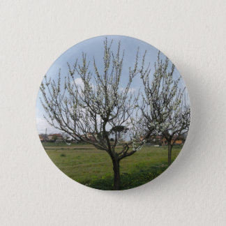 Blossoming pear tree in the garden  Tuscany, Italy 6 Cm Round Badge