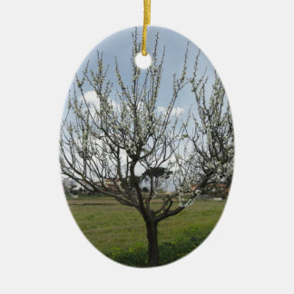 Blossoming pear tree in the garden  Tuscany, Italy Ceramic Oval Decoration