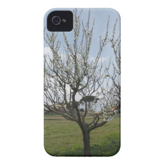 Blossoming pear tree in the garden  Tuscany, Italy iPhone 4 Cover