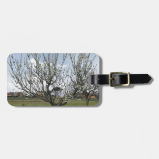 Blossoming pear tree in the garden  Tuscany, Italy Luggage Tag