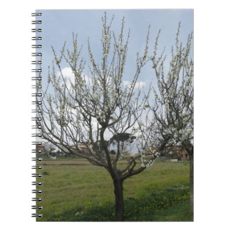Blossoming pear tree in the garden  Tuscany, Italy Notebook
