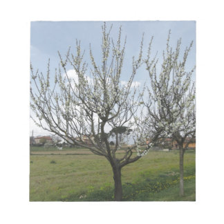 Blossoming pear tree in the garden  Tuscany, Italy Notepad