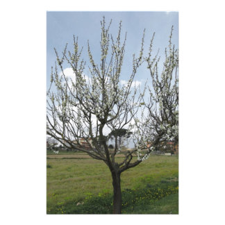 Blossoming pear tree in the garden  Tuscany, Italy Personalised Stationery