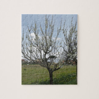 Blossoming pear tree in the garden  Tuscany, Italy Puzzles