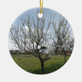Blossoming pear tree in the garden  Tuscany, Italy Round Ceramic Decoration