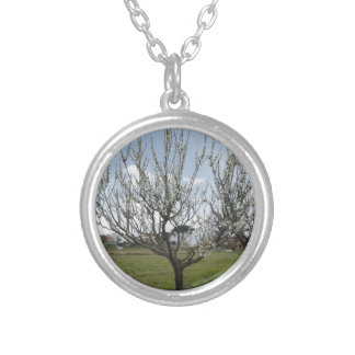 Blossoming pear tree in the garden  Tuscany, Italy Silver Plated Necklace