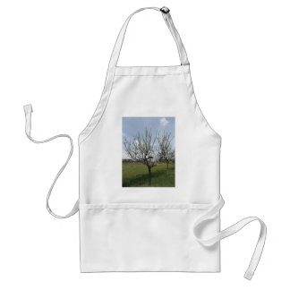 Blossoming pear tree in the garden  Tuscany, Italy Standard Apron