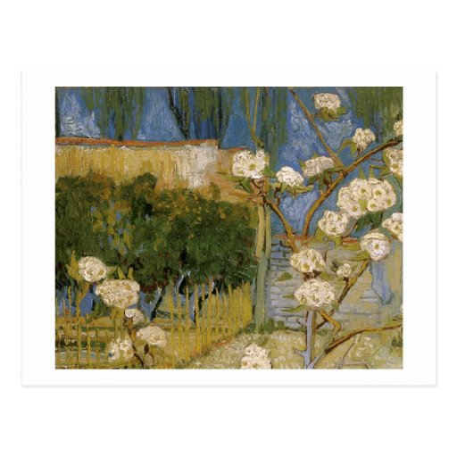Blossoming Pear Tree, Vincent van Gogh Post Cards