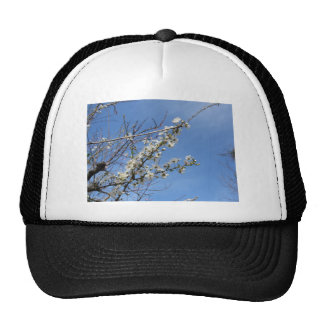 Blossoming plum against the sky . Tuscany, Italy Cap