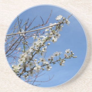 Blossoming plum against the sky . Tuscany, Italy Coaster