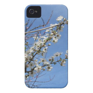Blossoming plum against the sky . Tuscany, Italy iPhone 4 Case-Mate Case