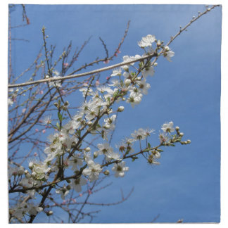 Blossoming plum against the sky . Tuscany, Italy Napkin