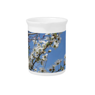 Blossoming plum against the sky . Tuscany, Italy Pitcher