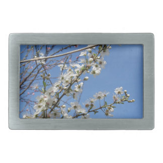 Blossoming plum against the sky . Tuscany, Italy Rectangular Belt Buckle