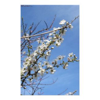 Blossoming plum against the sky . Tuscany, Italy Stationery Design