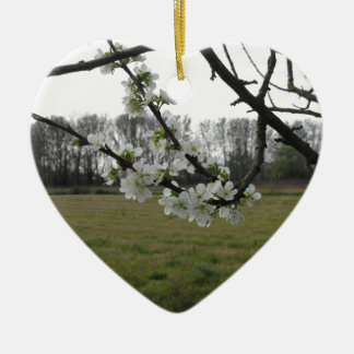Blossoming plum . Flowering white tree in spring Ceramic Heart Decoration