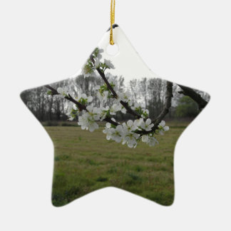 Blossoming plum . Flowering white tree in spring Ceramic Star Decoration