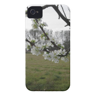 Blossoming plum . Flowering white tree in spring iPhone 4 Cover