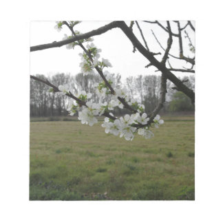Blossoming plum . Flowering white tree in spring Notepad