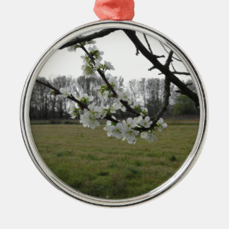 Blossoming plum . Flowering white tree in spring Silver-Colored Round Decoration