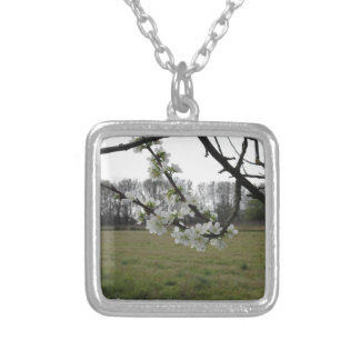 Blossoming plum . Flowering white tree in spring Silver Plated Necklace