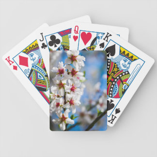 Blossoming tree branch with white flowers bicycle playing cards
