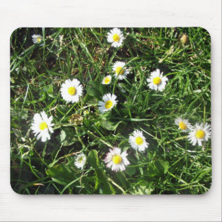 Blossoming white daisies close-up mouse pads