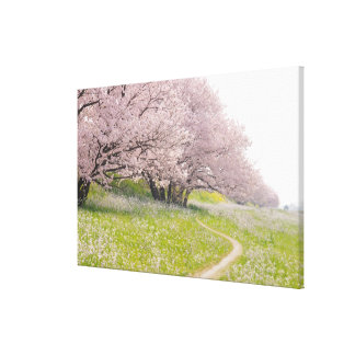 Blossoming Yoshino cherry trees in a field of Gallery Wrap Canvas