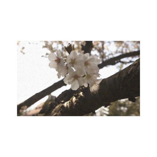 Blossoms Canvas Prints